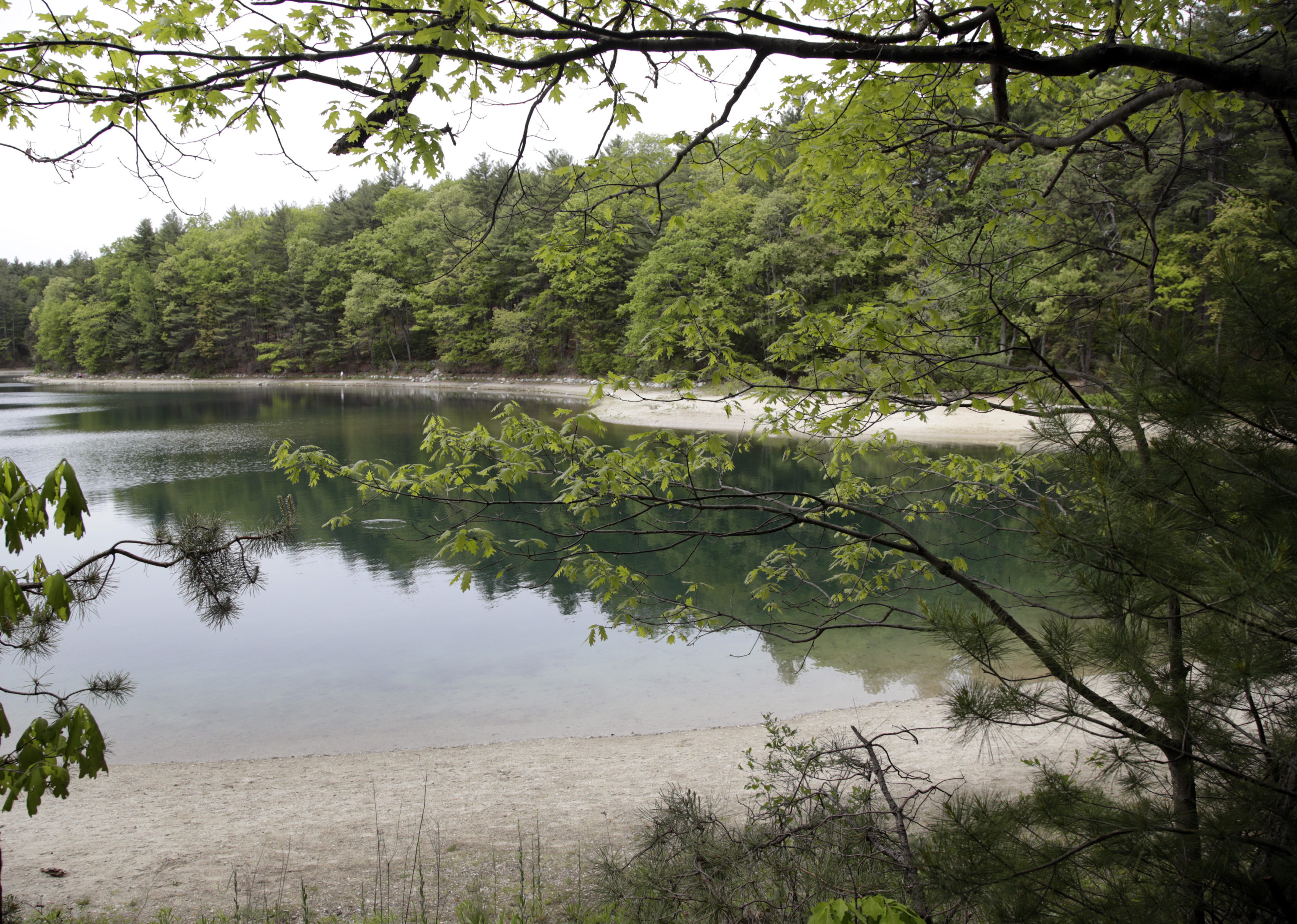 Walden Pond, pictured in 2017, in Concord, Mass., where 19th century American philosopher and naturalist Henry David Thoreau spent two years in solitude and reflection. (Elise Amendola/AP)