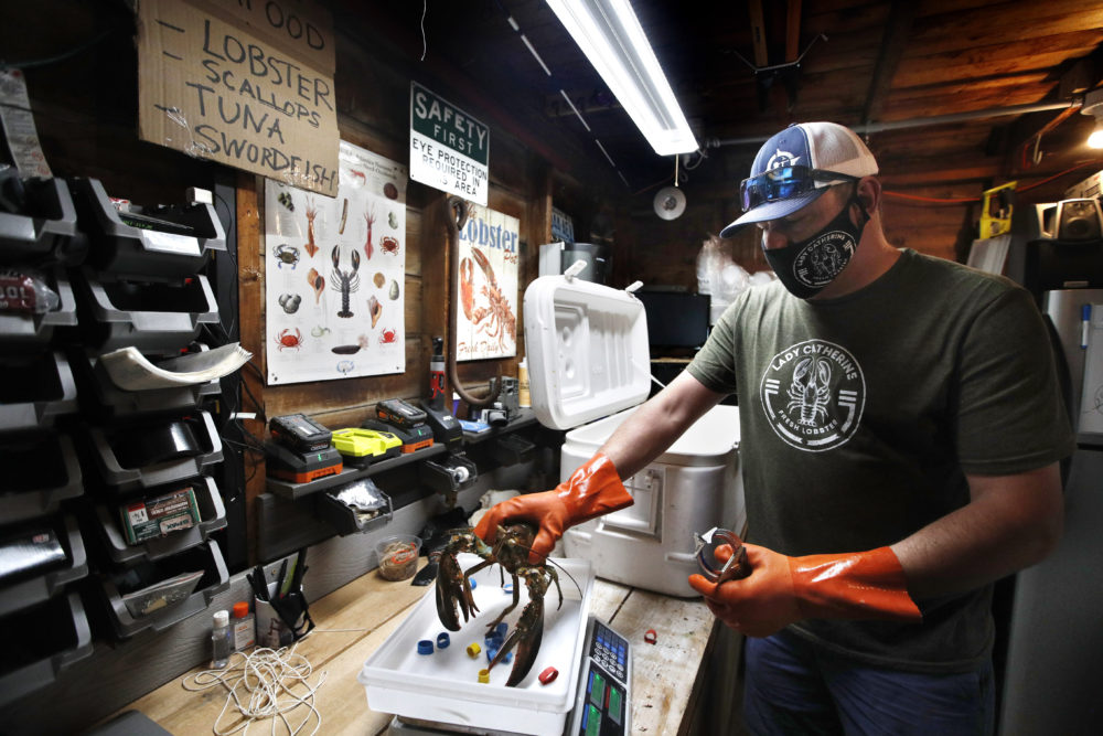 In this May 29 photo, Eric Pray weighs a lobster in his garage in Portland, Maine. The coronavirus shutdown had prompted Pray to sell his product direct to customers. (Robert F. Bukaty/AP)