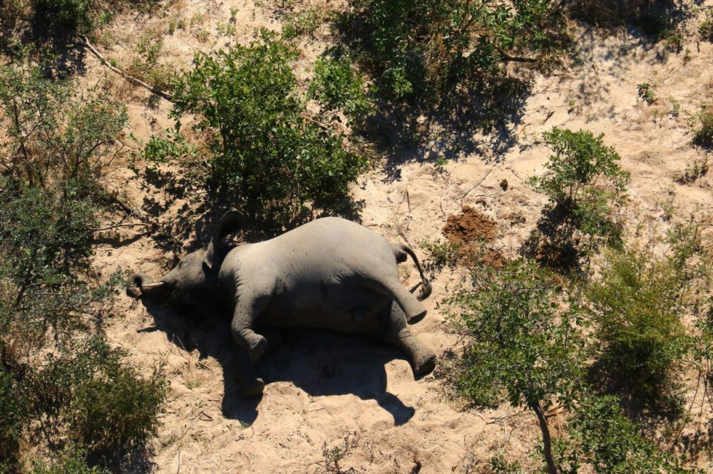 More than 350 elephants have mysteriously died in Botswana over the past few months. (National Park Rescue)