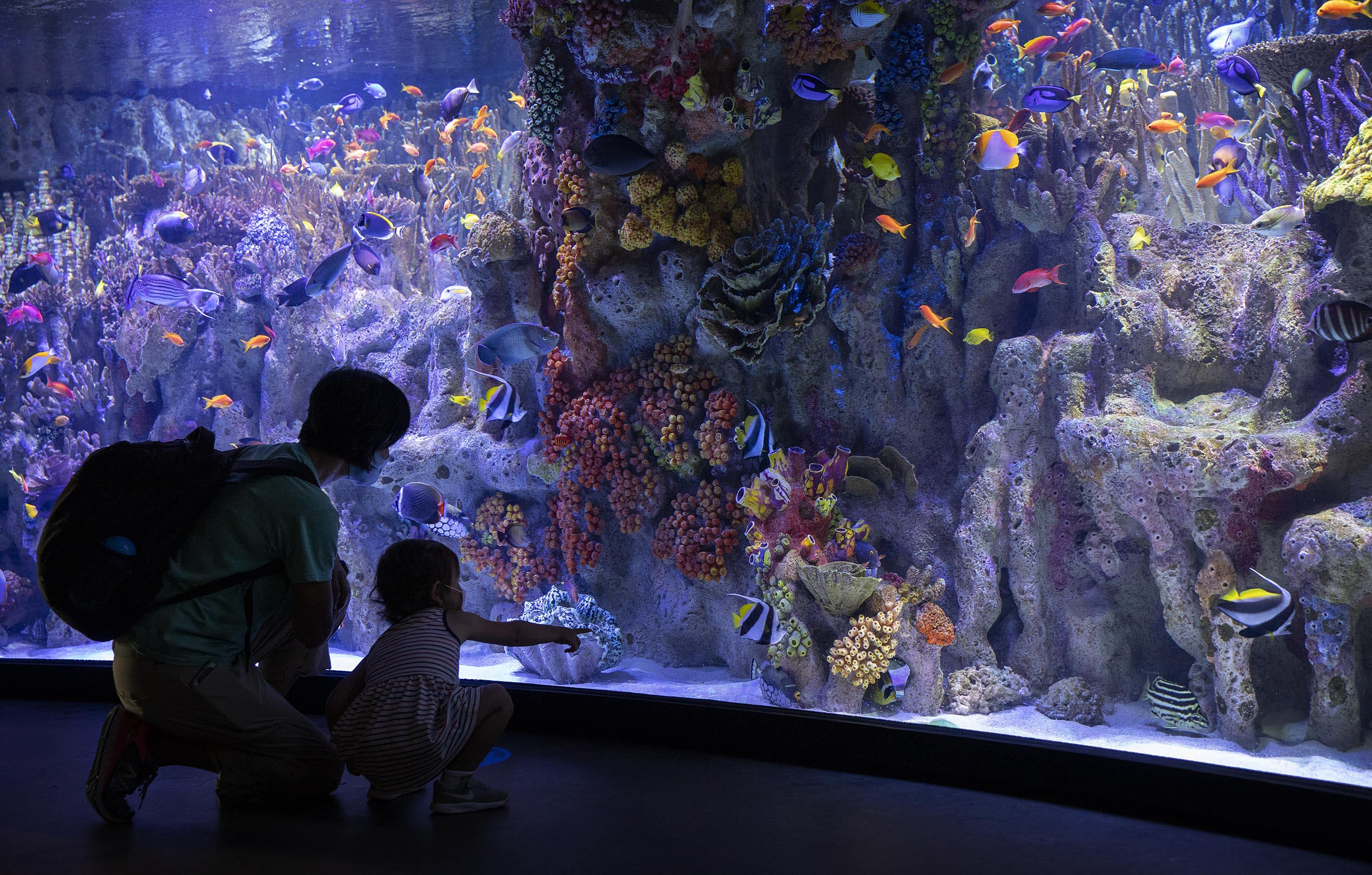 As the New England Aquarium opens for the first time since March, visitors, wearing masks and following social distancing instructions, look at fish in a tropical fish tank. (Robin Lubbock/WBUR)