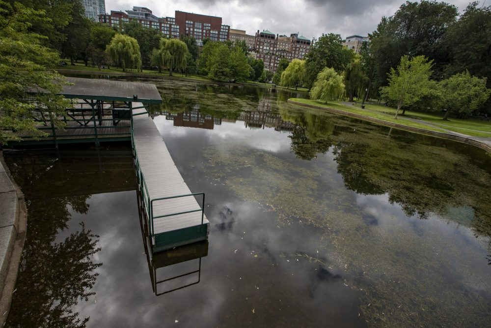 The dock at the side of the lagoon in the Boston Public Garden will remain empty until next spring. The Paget family formally announced they will not operate the swan boats this year due to the coronavirus pandemic. (Jesse Costa/WBUR)