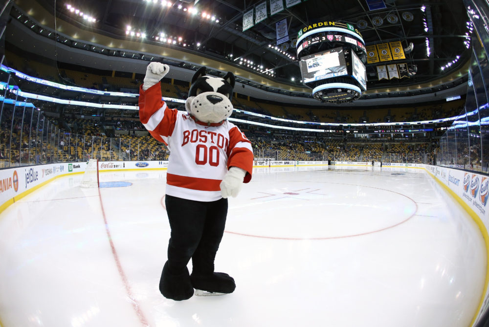 The BU Mascot Rhett on February 3, 2015 at the TD Garden in Boston, Mass. (Fred Kfoury III/Icon Sportswire via Getty Images)