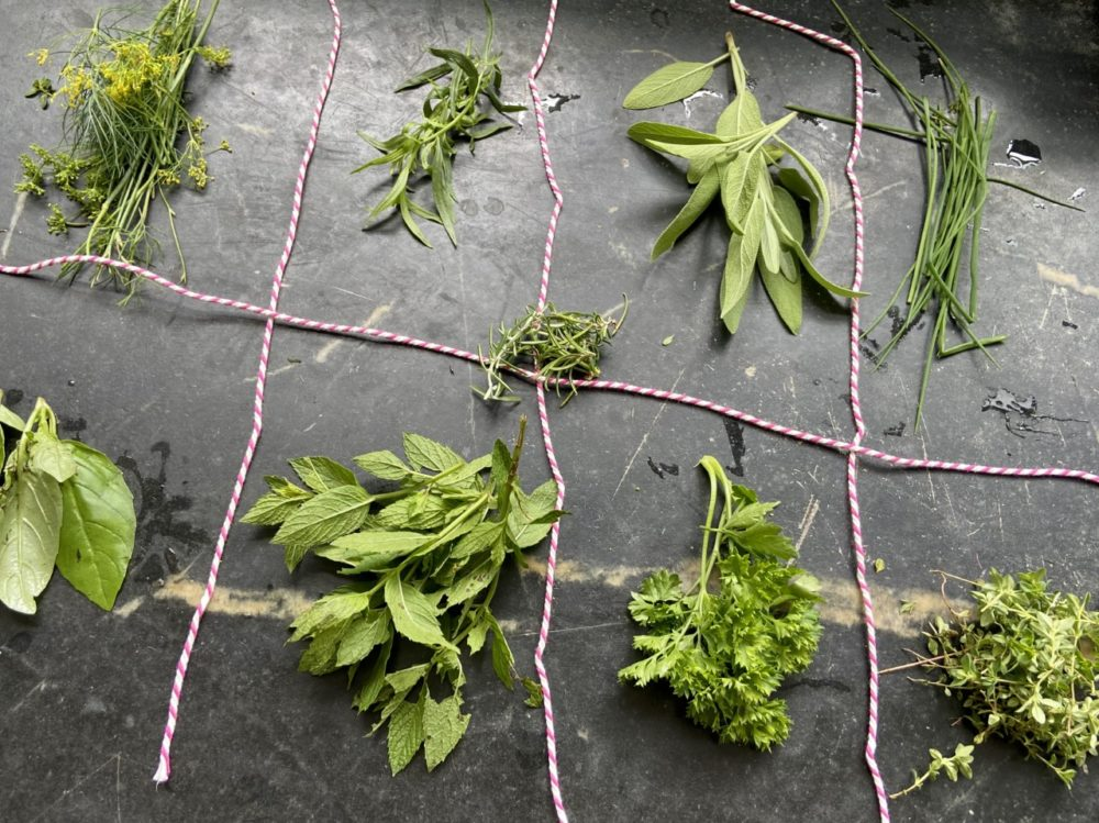 Top row (left to right): dill, tarragon, sage, chives. Middle row: rosemary. Lower row: basil, mint, parsley, thyme. (Kathy Gunst/Here & Now)