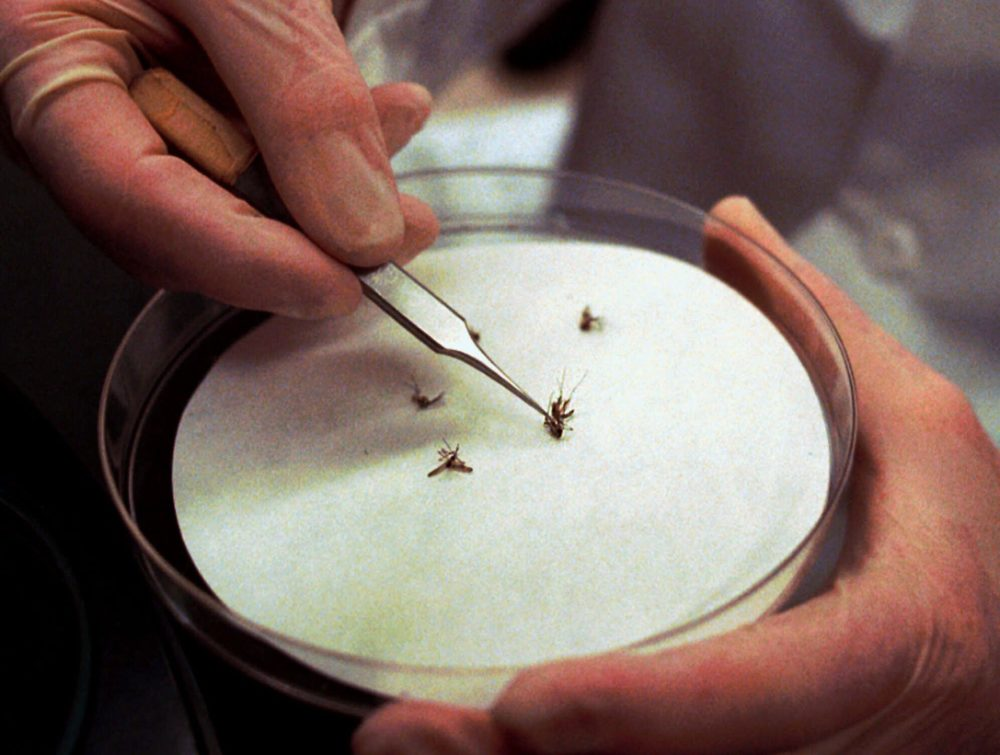 FILE--A technician at the State Laboratory Institute in Boston displays mosquitoes Monday, July 31, 2000, trapped locally for testing as possible carriers of the West Nile virus and eastern equine encephalitis. During Rhode Island's late spring, as they did last year, public works departments in every city and town will treat catch basins and storm drains, ideal breeding habitats, with floating pellets of larvicide that kill mosquitoes before they fly.  (AP Photo/Patricia McDonnell)