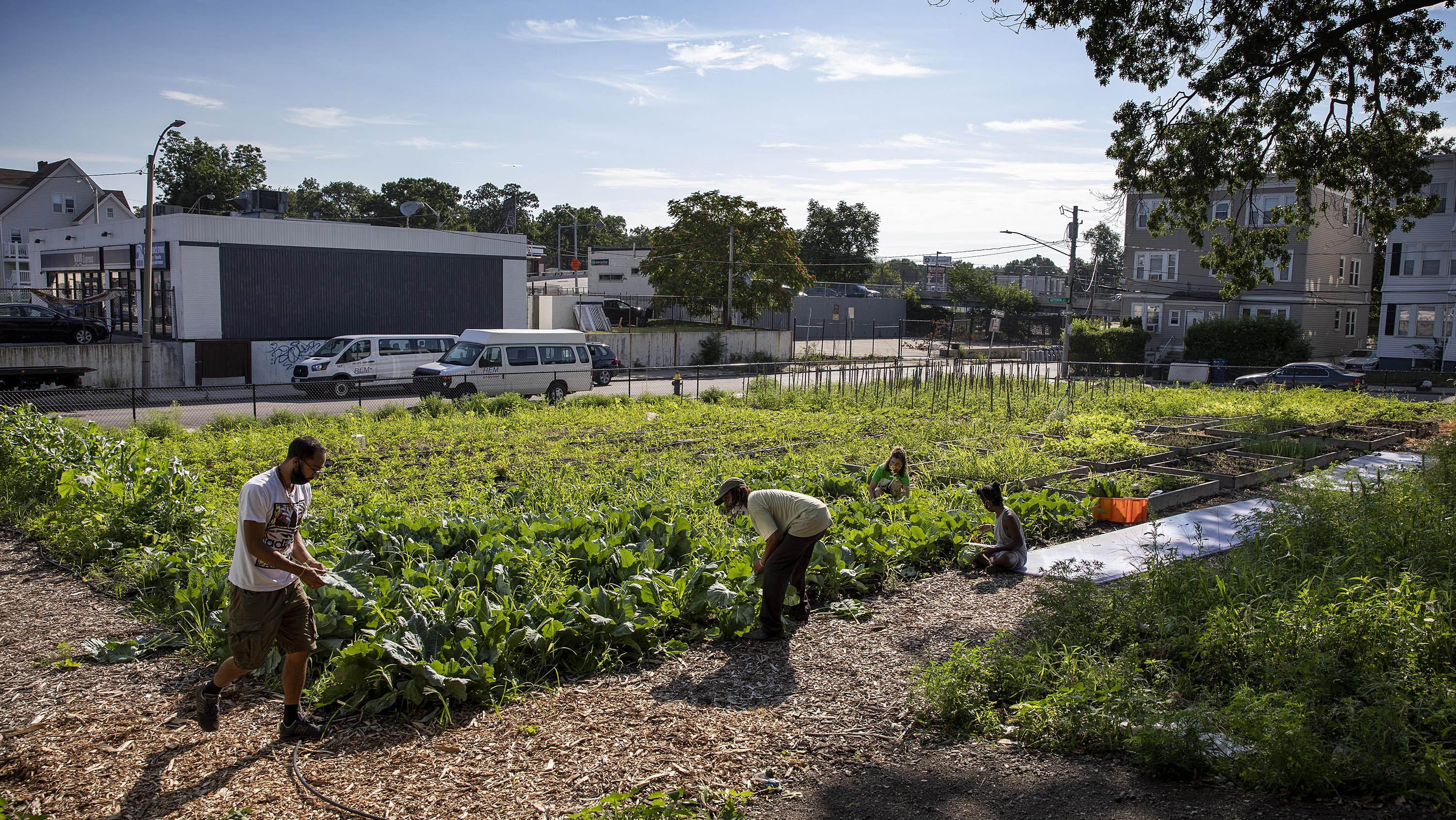 Training manager Bobby Walker instructs a group of UFI trainees on harvesting collard greens. (Robin Lubbock/WBUR)