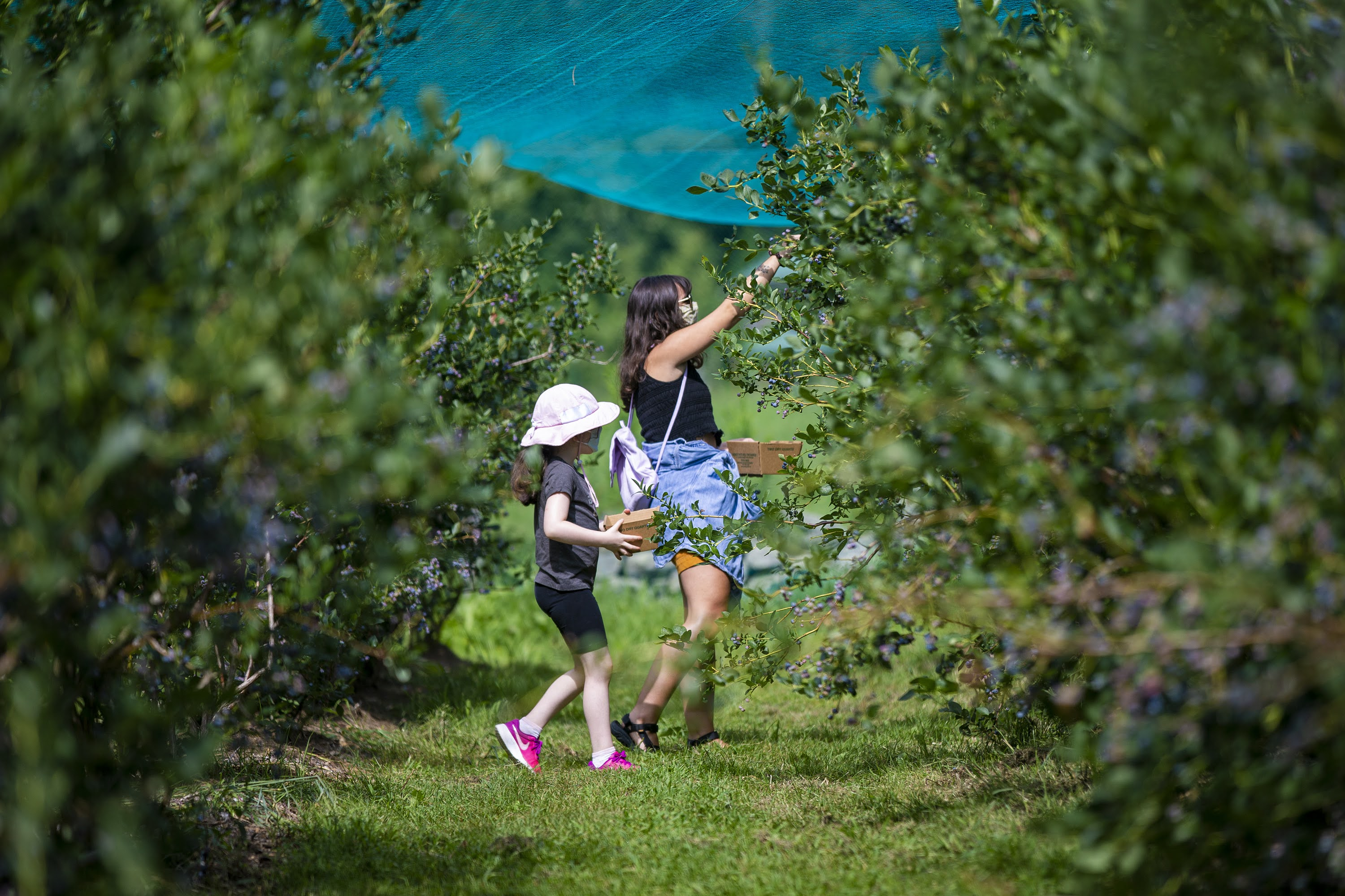 A mother and daughter pick blueberries at Honey Pot Hill Orchards in Stow. (Jesse Costa/WBUR)
