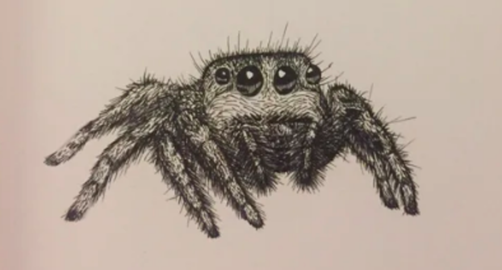 """Spider, pen on paper"" by Reddit user u/duke413 (Courtesy u/duke413)."