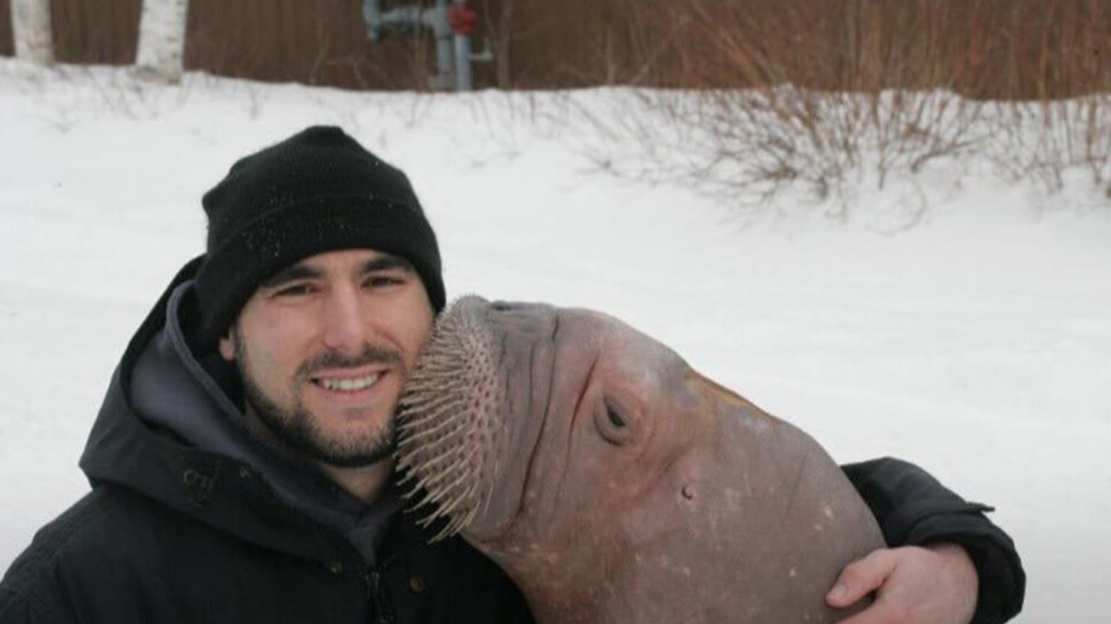 "Phil Demers is the subject of the documentary ""Walrus Whisperer."" (Courtesy Newburyport Documentary Film Festival)"