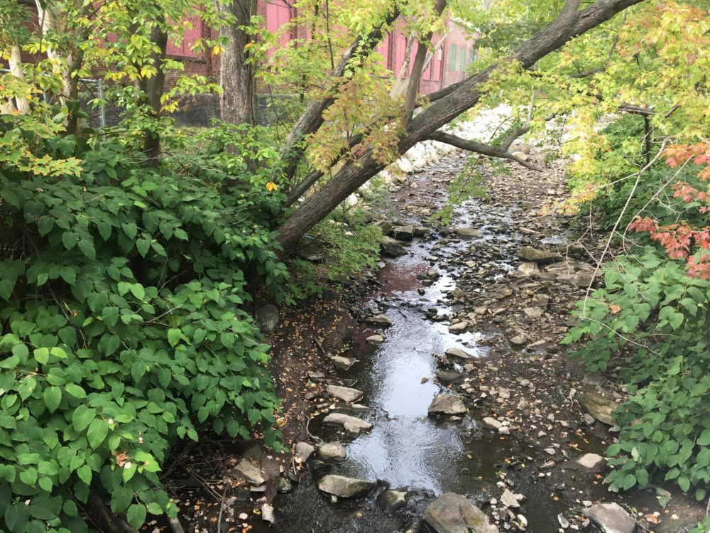 The West Branch of the Housatonic River on Mill Street in Pittsfield, Massachusetts, after an old dam was removed in the spring of 2020. (Nancy Eve Cohen/NEPM)