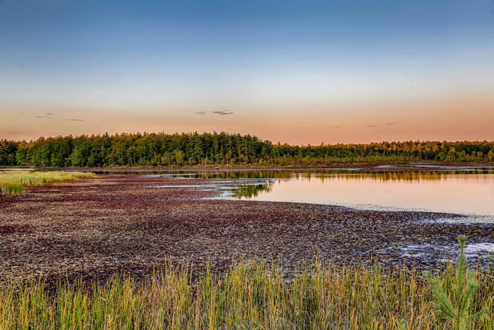 The Bellamy reservoir, seen here in Madbury, New Hampshire, recently, supplies drinking water to Portsmouth and has been depleted by months of drought. (Courtesy Shawn St. Hilaire)