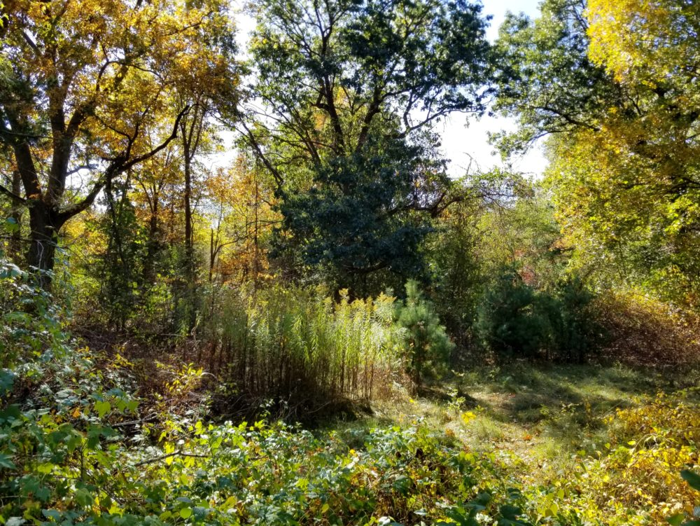 The fall landscape at Mass Audubon's Habitat Education Center and Wildlife Sanctuary, pictured in October 2020. (Leslee_atFlickr/flickr)