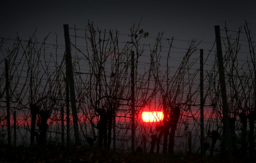 The sun sets behind the late autumn vineyards in Bavaria, Rödelsee. (Karl-Josef Hildenbrand/picture alliance via Getty Images)