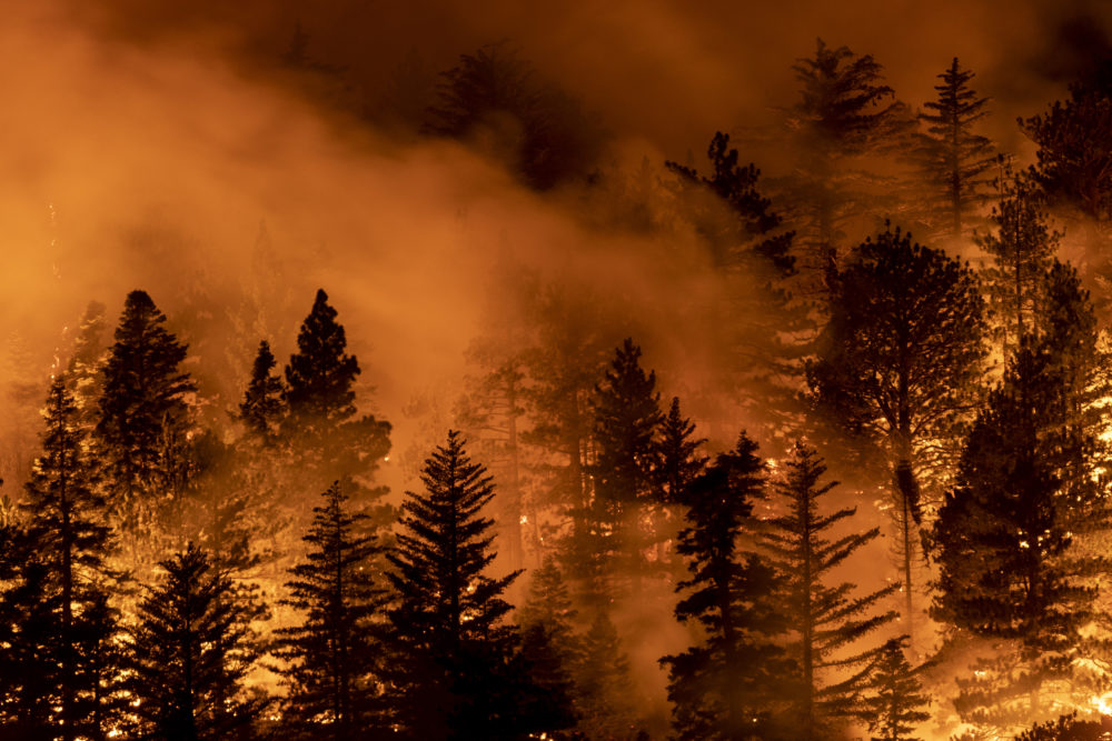 The Bobcat Fire burns through the Angeles National Forest on Sept. 11, 2020 north of Monrovia, California. (David McNew/Getty Images)