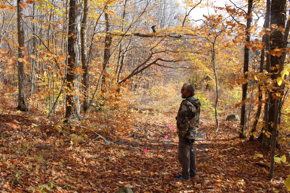 Dartmouth biologist Matt Ayres stands on a path in the Hubbard Brook Experimental Forest, near pink flags marking research areas. (Annie Ropeik/NHPR)