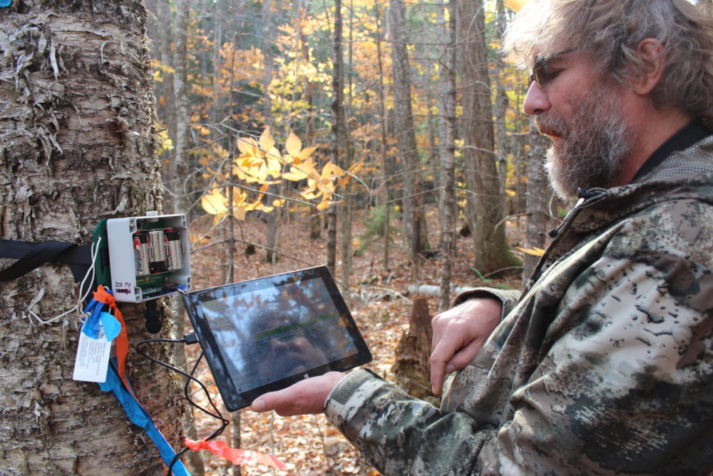 Matt Ayres programs a sound recorder that will remotely record migratory songbirds during mud season this spring. (Annie Ropeik/NHPR)