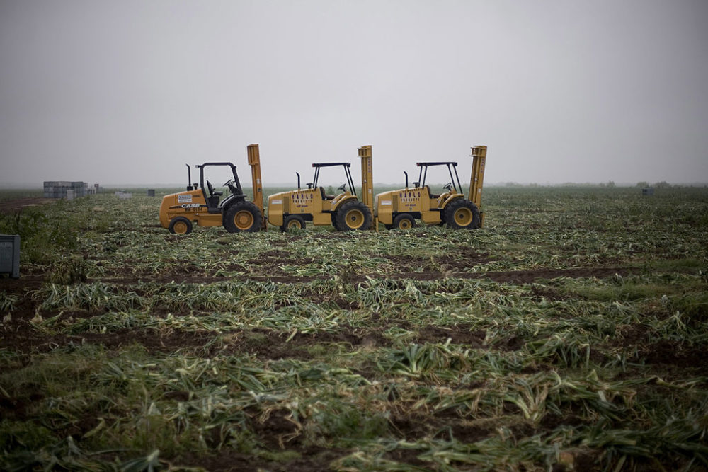 A view of a picked field after yellow onions were harvested in 2007 in Rio Grande City, Texas. (Robert Nickelsberg/Getty Images)