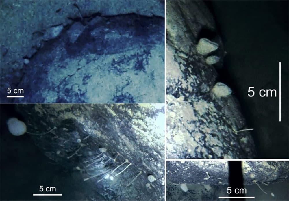 Images show the sponges and animals living under the Filchner-Ronne Ice Shelf. (British Antarctic Survey)