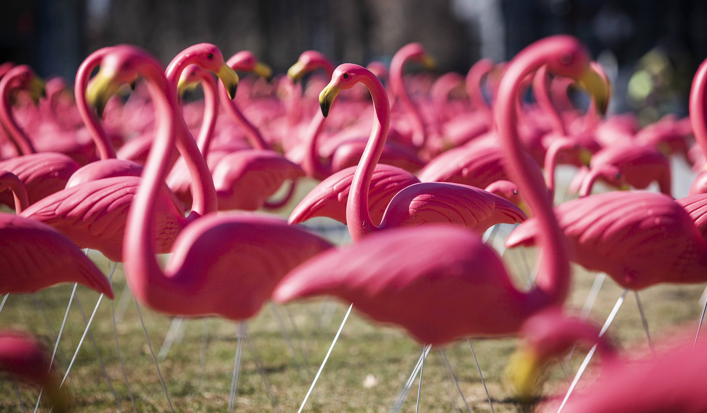 The colony of flamingos enjoys some spring sunshine on its first morning on the Seaport Common. (Robin Lubbock/WBUR)