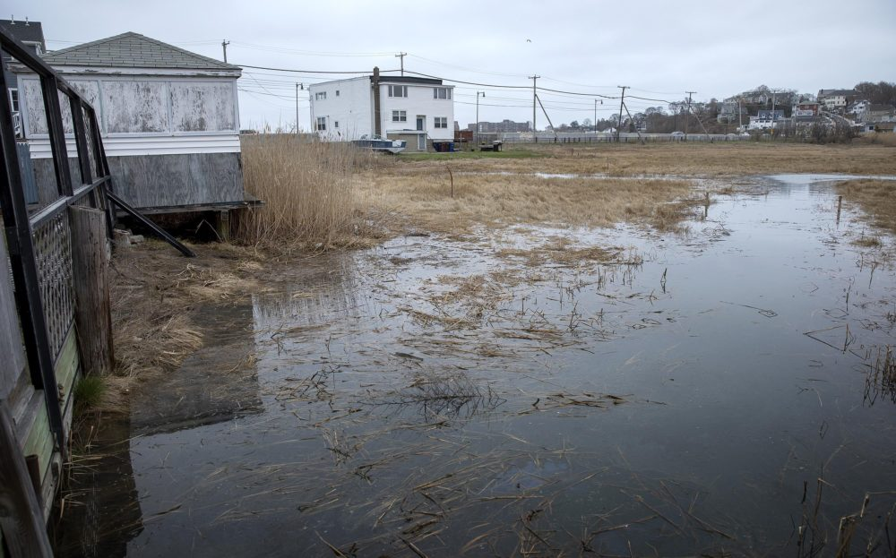At high tide, water from Belle Isle Marsh comes right up to the yards of the houses on Pearl Ave. (Robin Lubbock/WBUR)