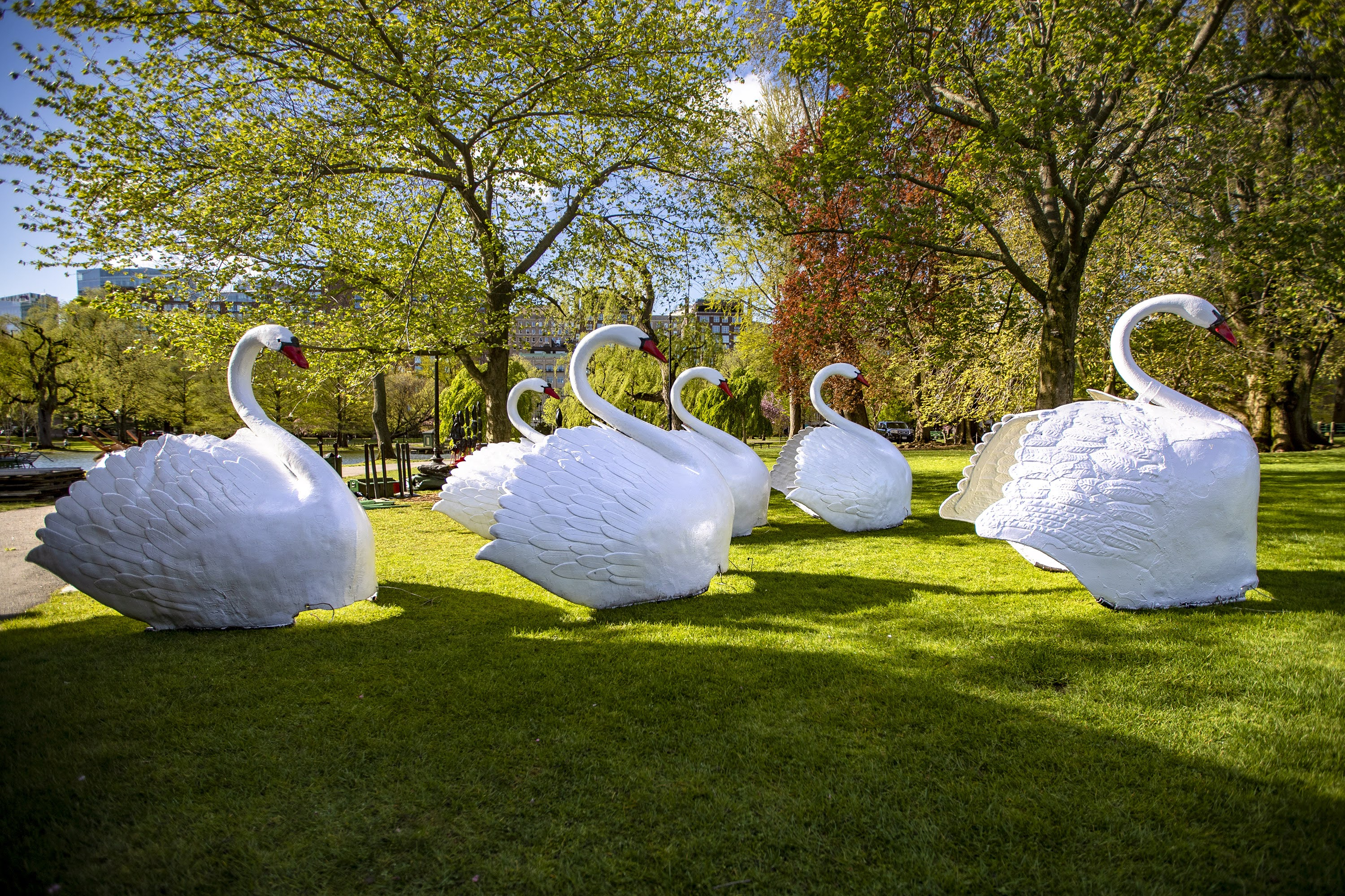 Six swan figures wait on the grass to be mounted onto their respective pontoons being assembled in the Public Garden. (Jesse Costa/WBUR)