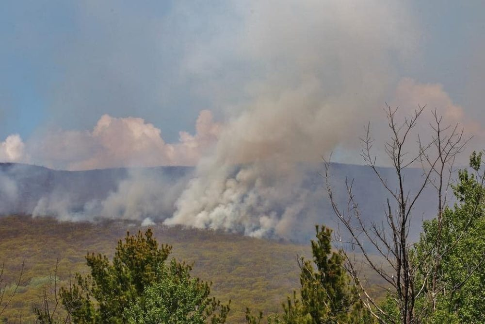 Fire crews battle an 800-acre fire in northern Berkshire County. (Savoy Fire Rescue/Facebook)