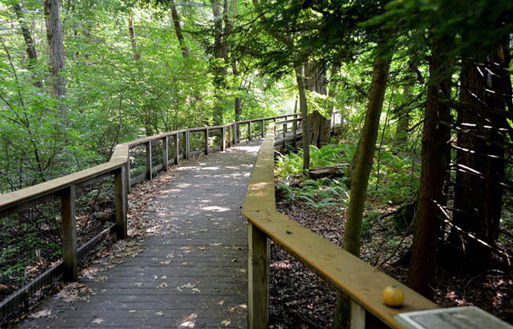 A wooden walkway snakes through the property of the Mass Audubon Arcadia Wildlife Sanctuary in Easthampton, Massachusetts. (Don Treeger/ The Republican / Masslive.com)