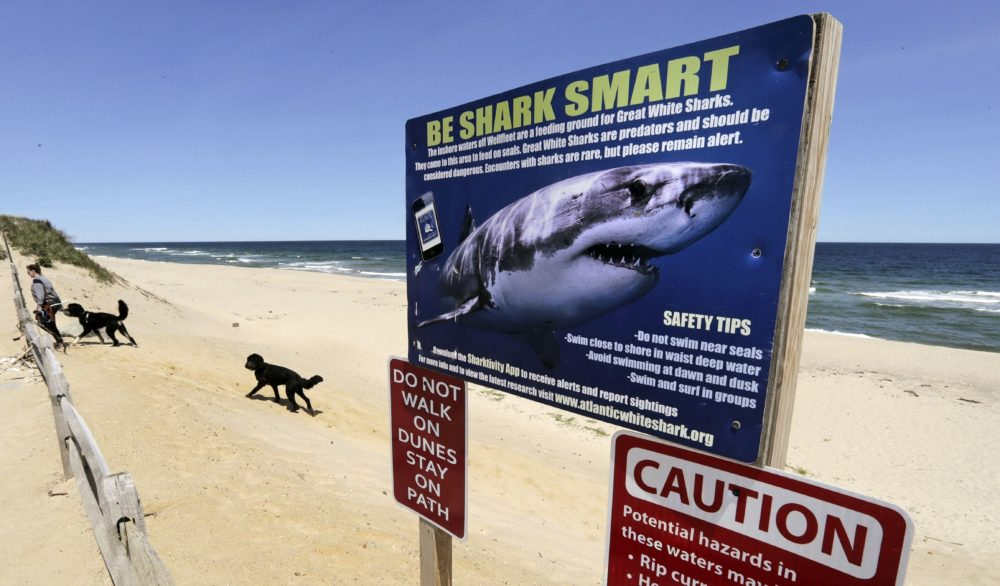 A woman walks with her dogs at Newcomb Hollow Beach in Wellfleet, Mass., where a boogie boarder was bitten by a shark in 2018 and later died of his injuries. Maine state coastal parks are going to adopt a flag system used in Massachusetts to warn beachgoers of the presence of sharks. (Charles Krupa/AP)