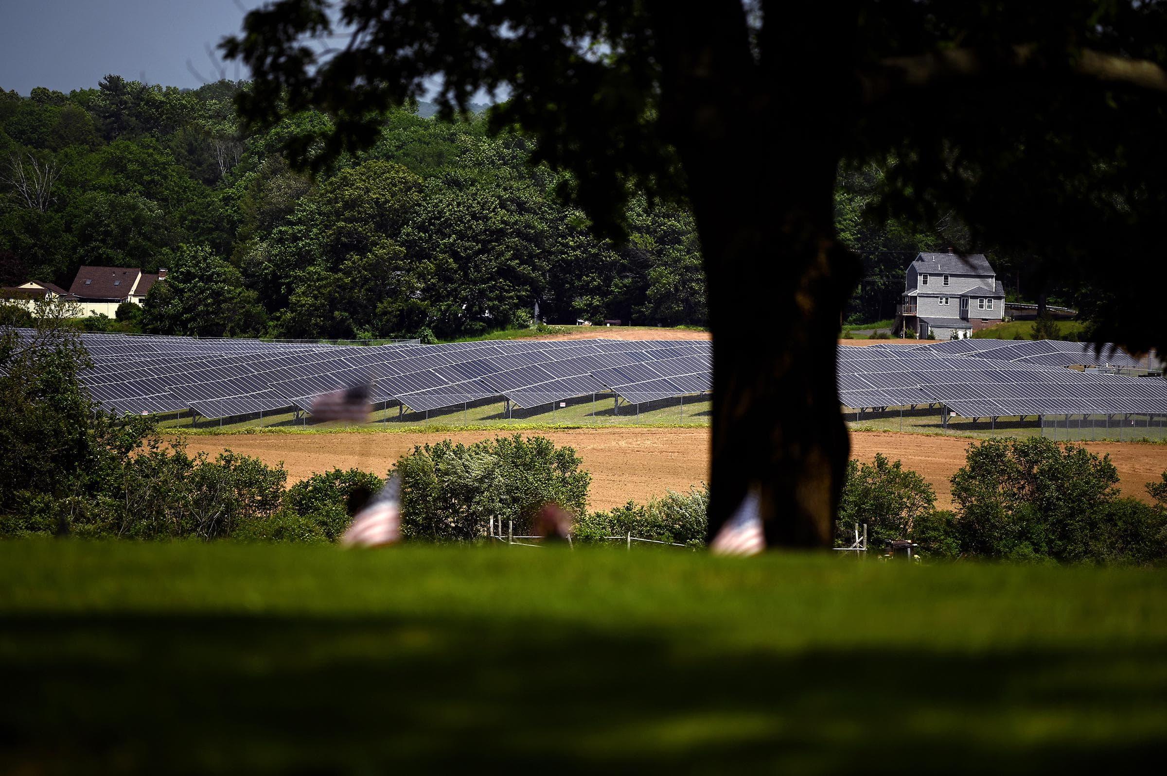 A solar farm near All Saints Cemetery in North Haven, Conn., on May 26, 2021. (Joe Amon/Connecticut Public)