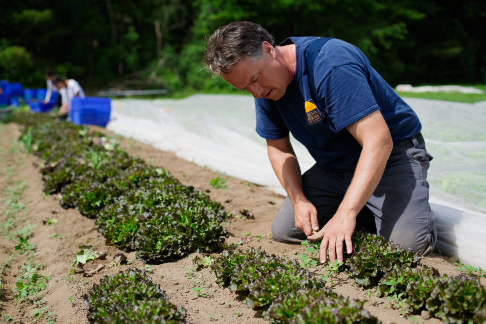 Siena Farms owner Chris Kurth says his business teetered on the edge of bankruptcy until CSA memberships quadrupled during the pandemic. (Chris Cardoza/Siena Farms)