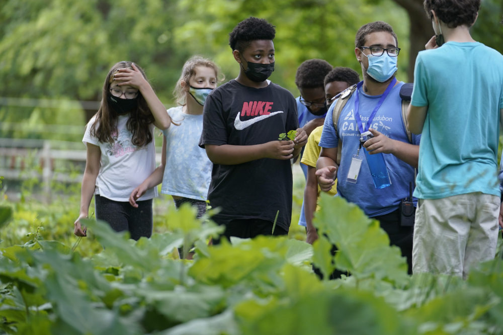 Students Lyla Mendoza, left, Nesha Moskowitz, second from left, Giovanni Pierre, center, and camp educator Adrian Oller, center right, examine wild sorrel during a hike at Mass Audubon's Boston Nature Center and Wildlife Sanctuary, in Mattapan on Wednesday, June 23, 2021. Audubon Society chapters are grappling with how to address their namesake's legacy as the nation continues to reckon with its racist past. John James Audubon was a celebrated 19th century naturalist but also a slaveholder publicly opposed to abolition. (Steven Senne/AP)