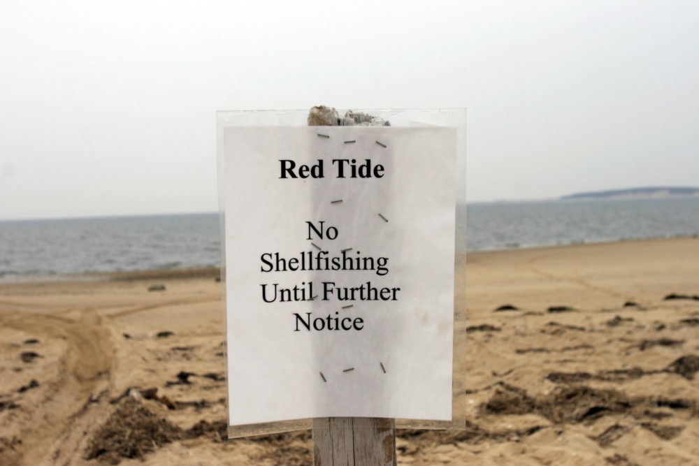 In this 2005 file photo, a sign declares Indian Neck beach closed to shellfishing in Cape Cod Bay of Wellfleet Harbor (Jodi Hilton/Getty Images)
