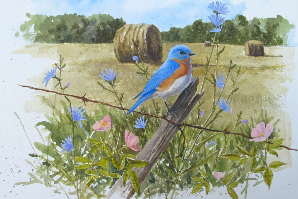 Eastern Bluebird with chicory and roses from The Bluebird Effect: Uncommon Bonds with Common Birds. (Julie Zickefoose)