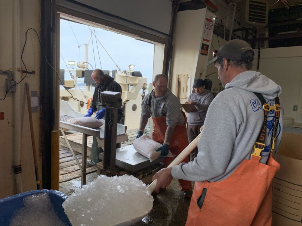 Bags of scallops are offloaded and weighed at the Stonington town dock. (Harriet Jones/Connecticut Public Radio)