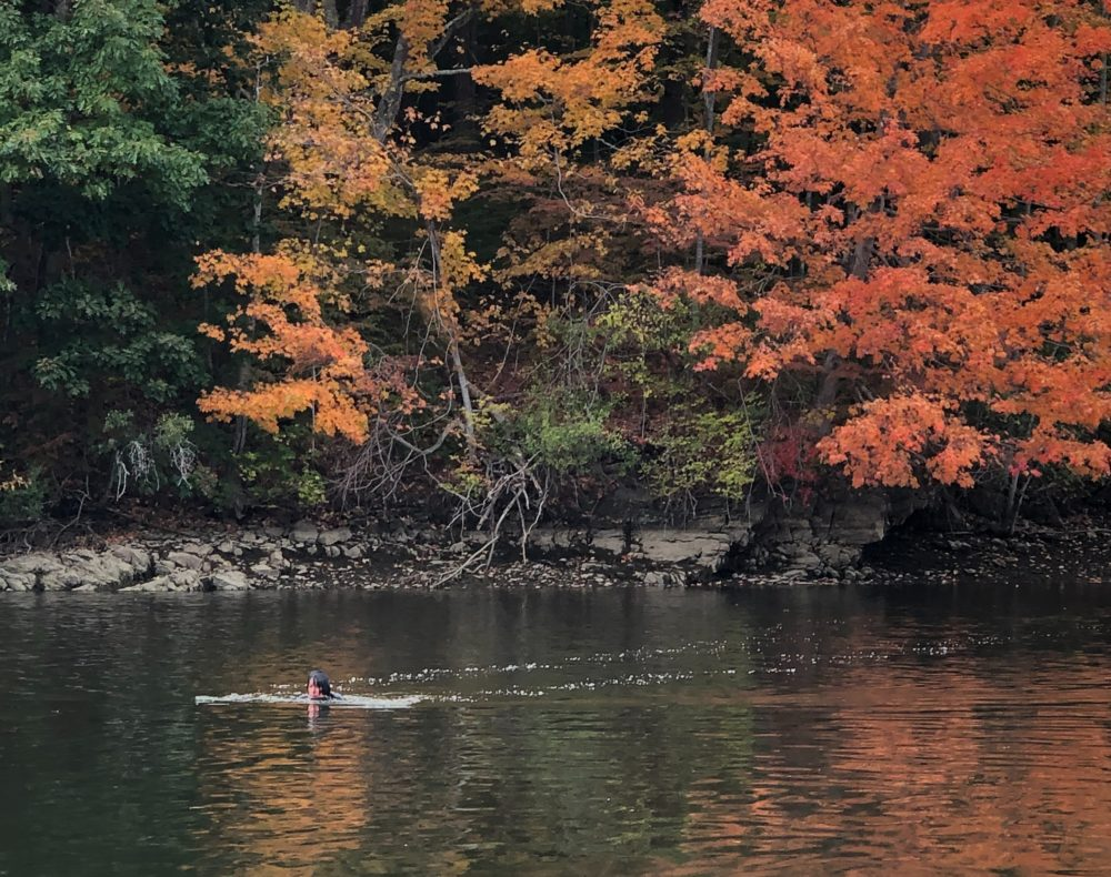 The author swimming in the Salmon Falls River in October 2020. (Courtesy Kathy Gunst)