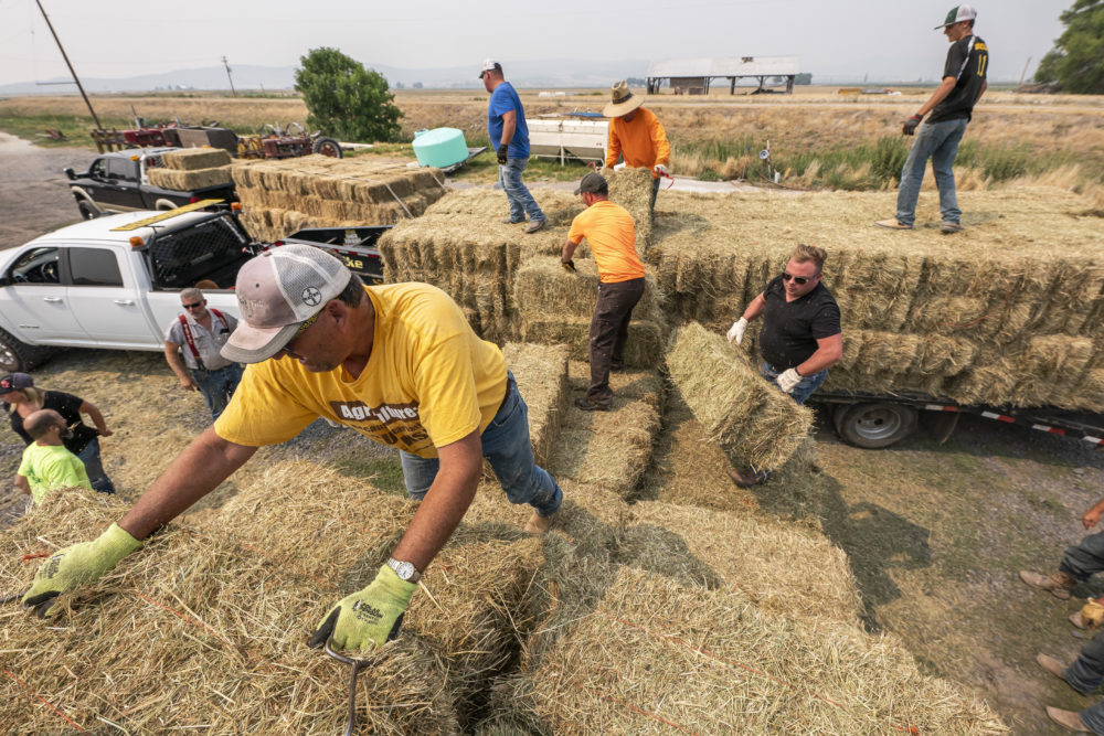 Jim Shanks, left, and other ranchers from the Klamath River Basin collect hay. (AP Photo/Nathan Howard)