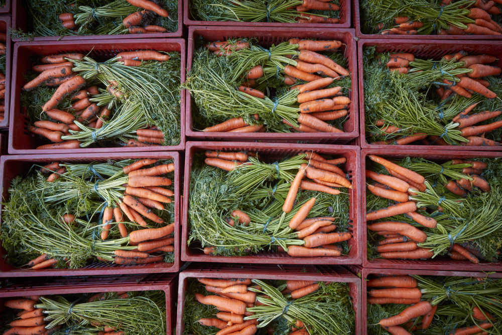 Freshly picked carrots. (Kiran Ridley/Getty Images)